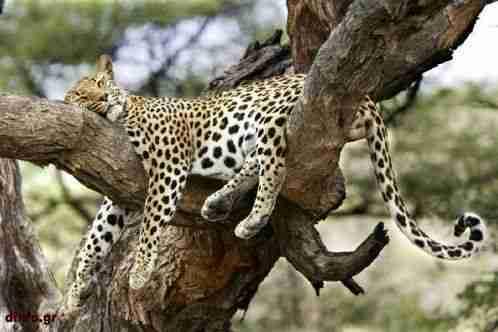 Ζώα που κοιμούνται