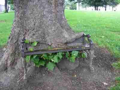 Πράγματα που ανήκουν πλέον στα δέντρα