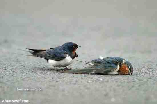 Ποιός είπε ότι τα πουλιά δεν έχουν συναισθήματα