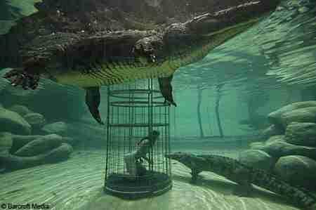 Κολυμπώντας με τους κροκόδειλους