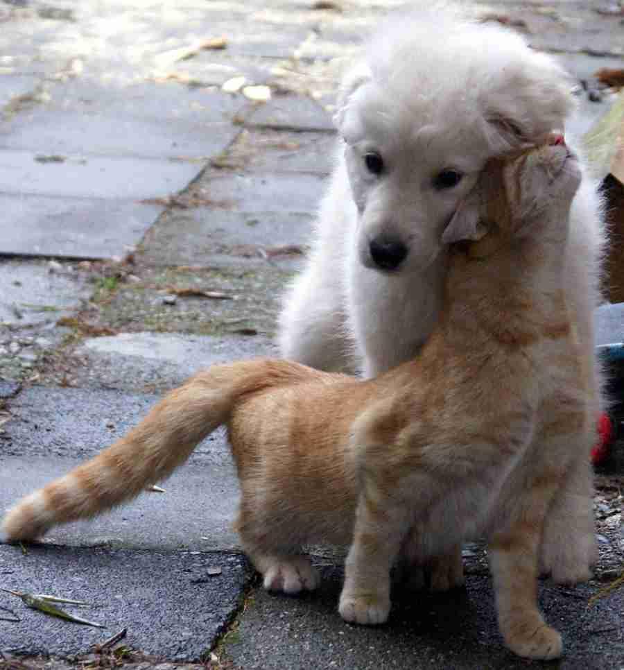 Σαν τον σκύλο με την γάτα