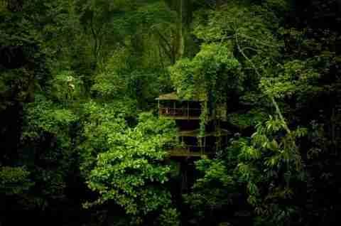 Zώντας στα δέντρα της ζούγκλας
