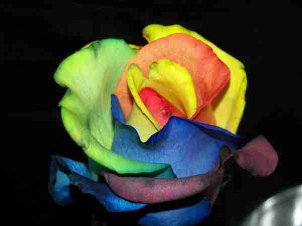 Πολύχρωμα Τριαντάφυλλα!