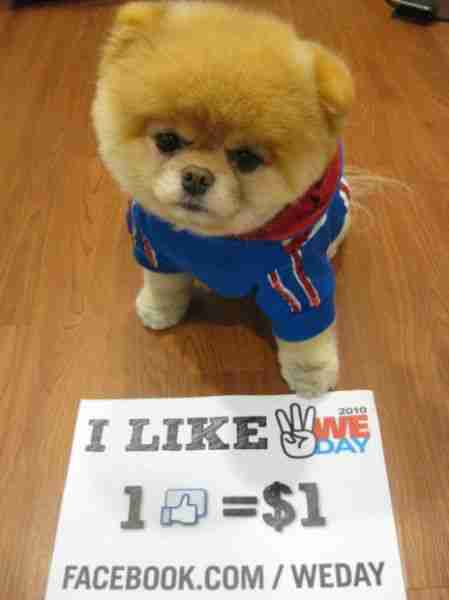 Ο πιο διάσημος σκύλος στο Facebook