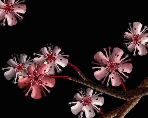 Λουλούδια από ανθρώπινα σώματα!