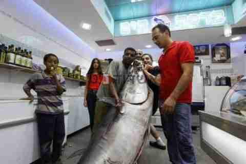 Ψάρεψε 150 κιλά Τόνο!