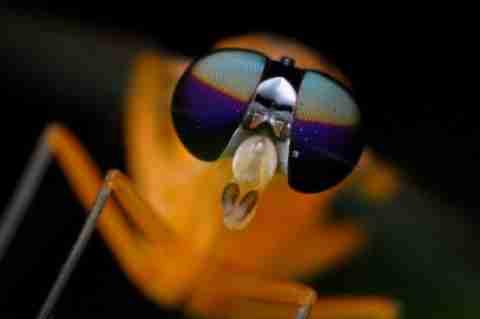 Τα μάτια μίας μύγας