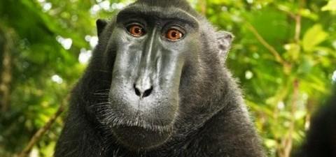 makakos (2)