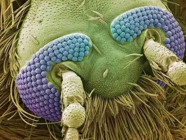 Ο κόσμος μέσα από ένα μικροσκόπιο