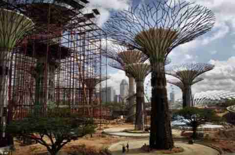 Τα παράξενα δέντρα της Σιγκαπούρης