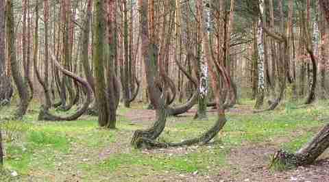 Το κυρτωμένο δάσος