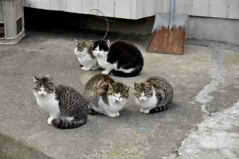 Το Νησί της Γάτας!