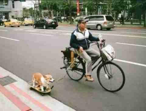 Βγάζοντας τον σκύλο βόλτα..