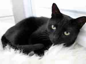 Tommaso: ο πλουσιότερος γάτος του κόσμου