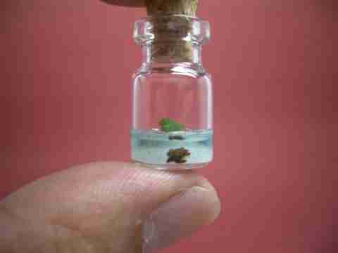 Ο κόσμος σε ένα μπουκάλι