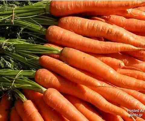 Εθισμός στα Καρότα