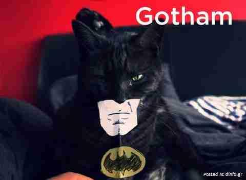 Έχουν οι γραμματοσειρές με τις γάτες
