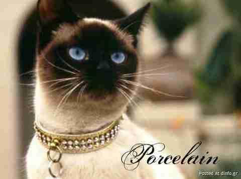 Γάτες και γραμματοσειρές..