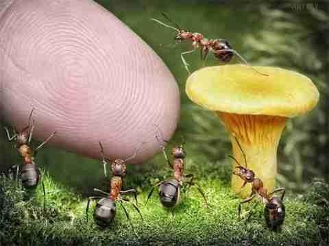 Ο συναρπαστικός κόσμος των μυρμηγκιών -  dinfo.gr