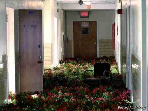 28000 λουλούδια σε εγκατελειμένο ψυχιατρείο
