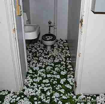 28000 λουλούδια σε εγκαταλελειμμένο ψυχιατρείο