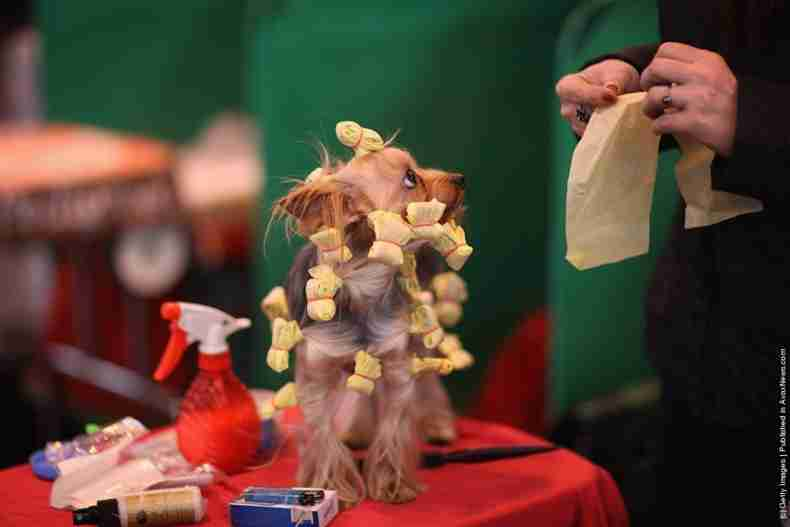 Crufts, η γιορτή των σκύλων