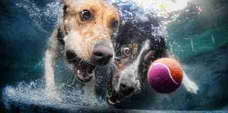 Φωτογραφίες σκυλιών κάτω από το νερό