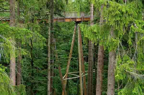 Ξύλινη γέφυρα πάνω από τα δέντρα