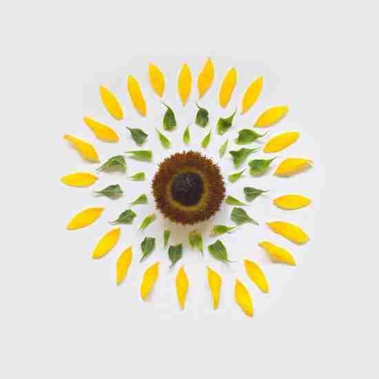Η έκρηξη των λουλουδιών