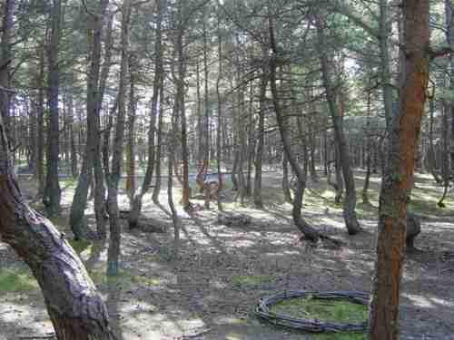 """Το """"δάσος που χορεύει"""""""