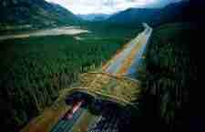 Γέφυρες αποκλειστικά για άγρια ζώα