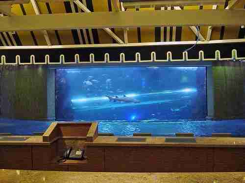 Τσουλήθρα ανάμεσα από καρχαρίες