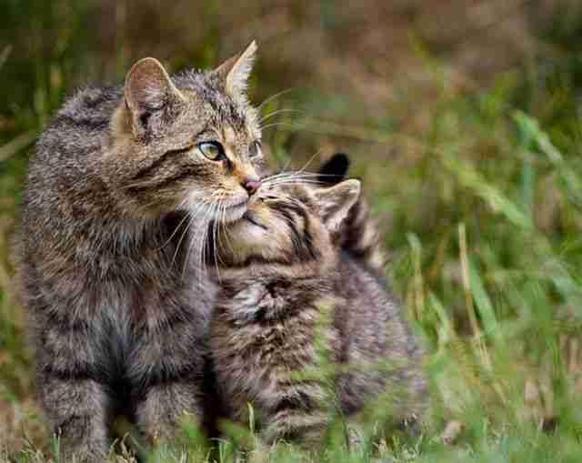 Χαριτωμένα ζώα ίδια η.. μαμά τους