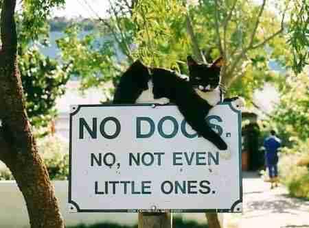 Αποτέλεσμα εικόνας για πινακιδες για σκυλια