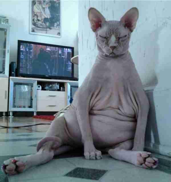 Ζόμπι ο γάτος !