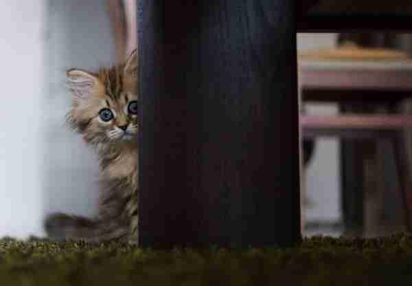Ίσως το πιο χαριτωμένο γατάκι στον κόσμο!