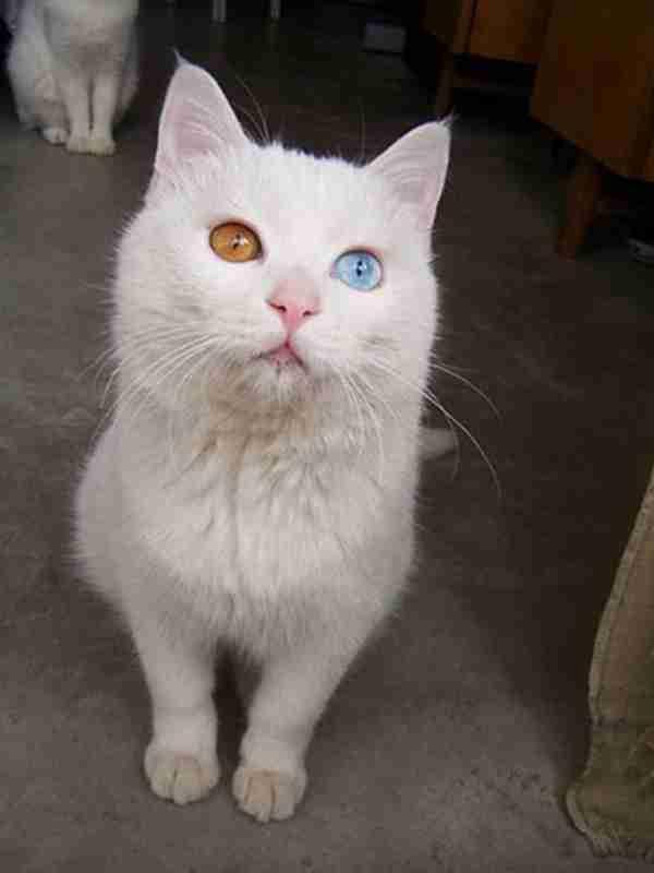 20 ζώα με διαφορετικό χρώμα σε κάθε μάτι