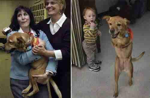 """Μια σκυλίτσα που την έλεγαν """"Πίστη"""""""