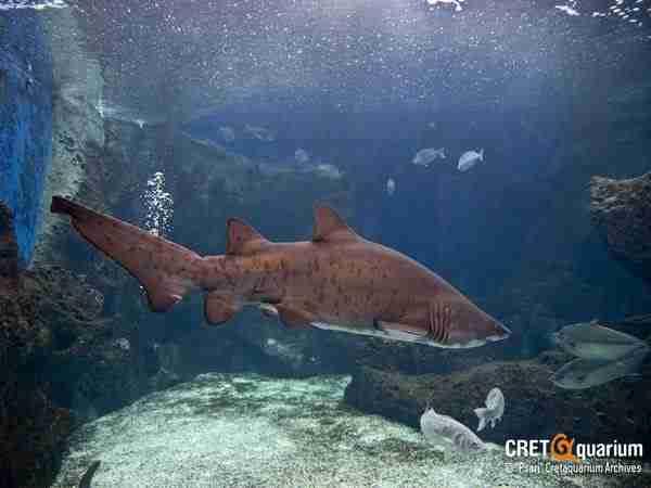 Θαλασσόκοσμος, το μεγαλύτερο ενυδρείο της Αν. Μεσογείου