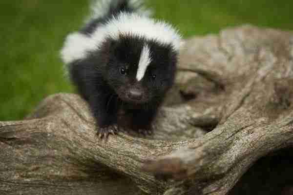 30 μωρά ζώων που θα σας φτιάξουν την διάθεση!