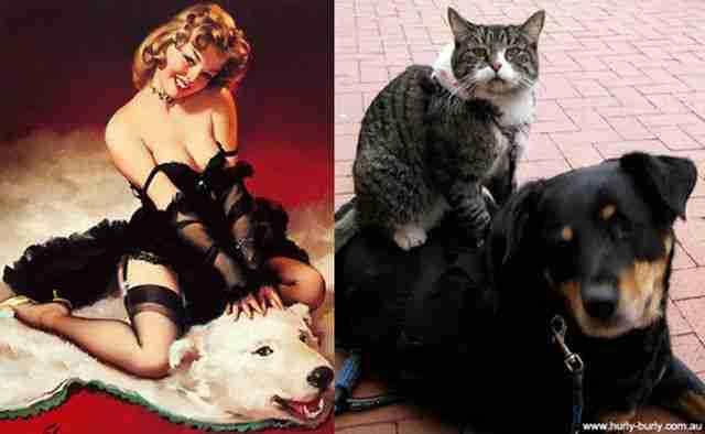 Γάτες vs μοντέλα..