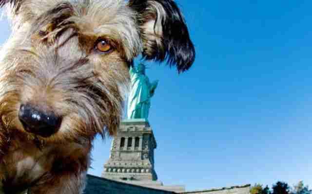 Όσκαρ, ο πιο πολυταξιδεμένος σκύλος στον κόσμο