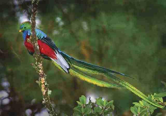 19-thor-quetzal_print2