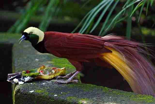 Bali_Bird_Park-6