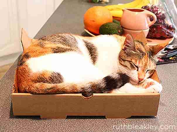 Pizza Box Cat Bed