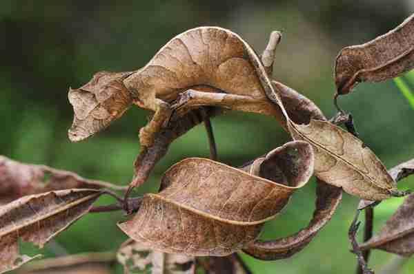 Τα 10 πιο παράξενα ζώα που κινδυνεύουν με εξαφάνιση