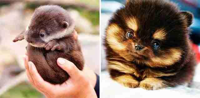 32 χαριτωμένα ζώα εισβάλλουν στις οθόνες σας