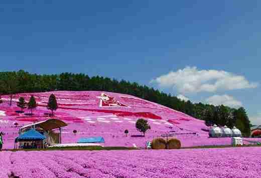 Μια μαγευτική ρόζ θάλασσα από λουλούδια