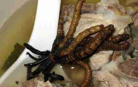Σιράκο, ή αλλιώς όρχεις ψαριών με σπέρμα