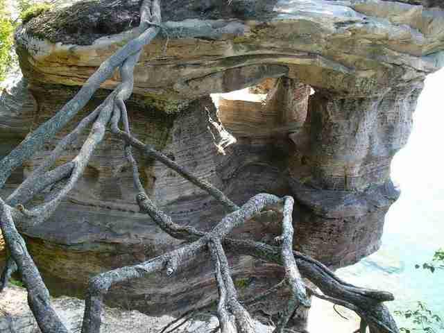 Το τυχερό δέντρο της λίμνης Σουπίριορ